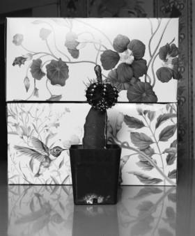 John Gittins, </span><span><em>Cactus with Bird, 2002-5</em>, </span><span>carbon ink print , 14.0 x 11.6 cm