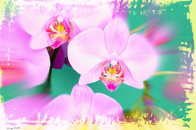 Greg Stott, </span><span><em>Victoria's Orchid, 2004</em>, </span><span>Digital Photography &amp;amp; Illustration, 19  x 13 inches