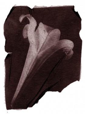Claudia Seabra, </span><span><em>Lily, 2000</em>, </span><span> Emulsion Transfer, 8 x 10 inches