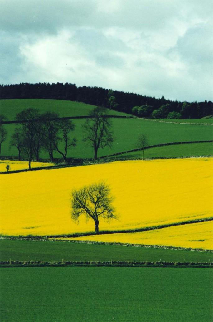Barbara Allan, </span><span><em>The Wishing Tree 2003</em>, </span><span>16x20