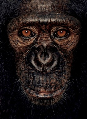 © James Mollison, courtesy Chris Boot, </span><span><em>James, 2001, from James and Other Apes</em>