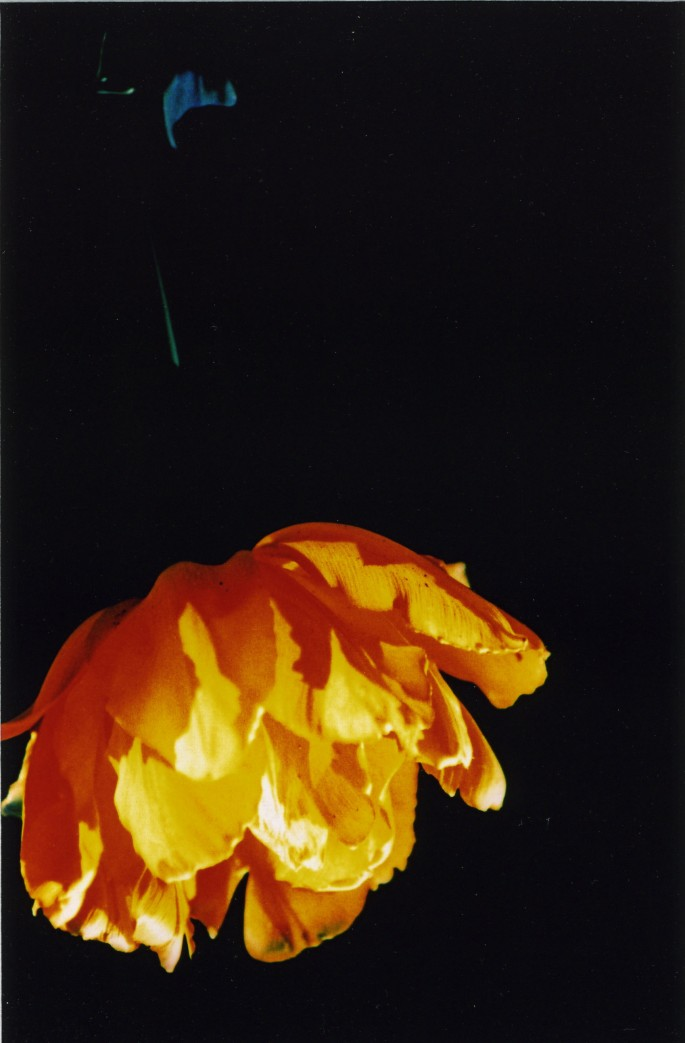 Deborah Cox, </span><span><em>Bonfire Poppy, 2003</em>, </span><span>Colour Photographic Print, 6x9