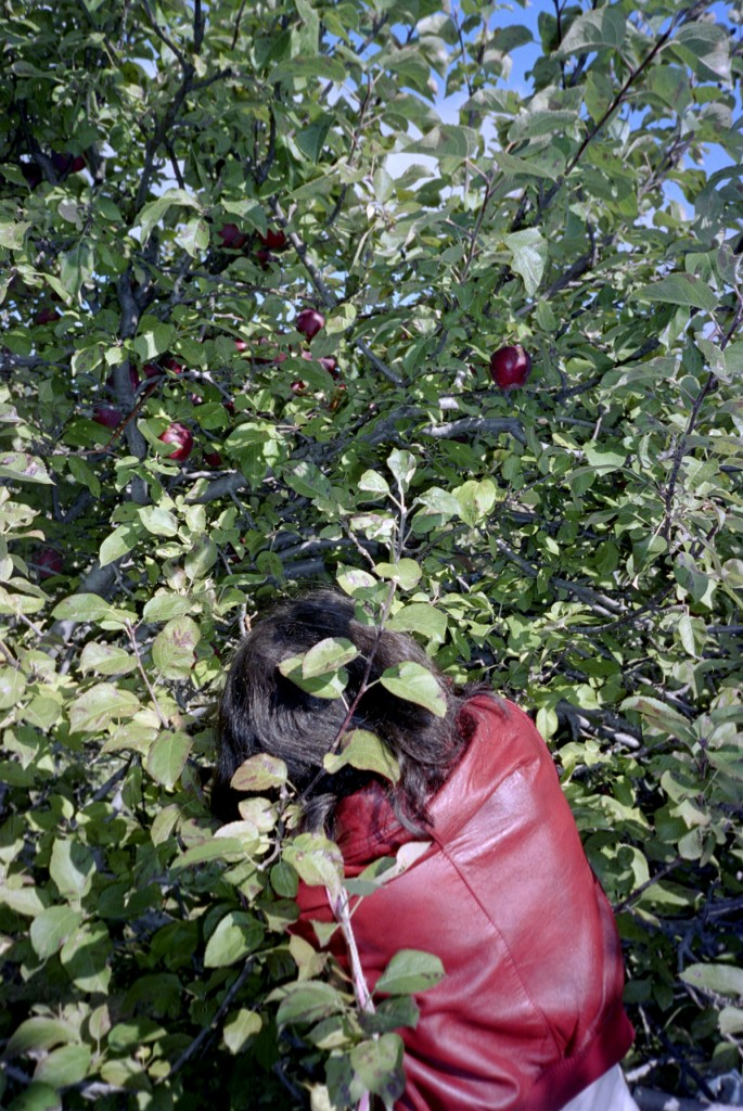 Ryan Foerster, </span><span><em>Glenna picking apples, 2004</em>, </span><span>c print, 16 1/2  x 24