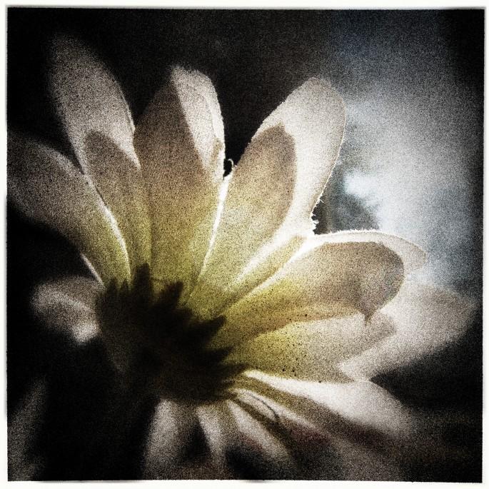 Michael Krauss, </span><span><em>Flower One. 2006</em>, </span><span>Photograpy, Mixed Media 12.5
