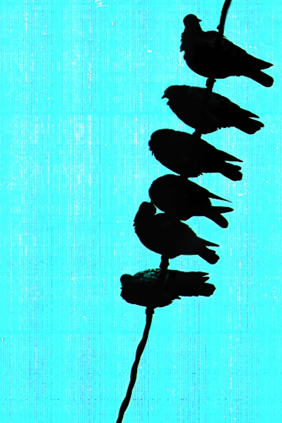 <em>Birdsong, 2006</em>