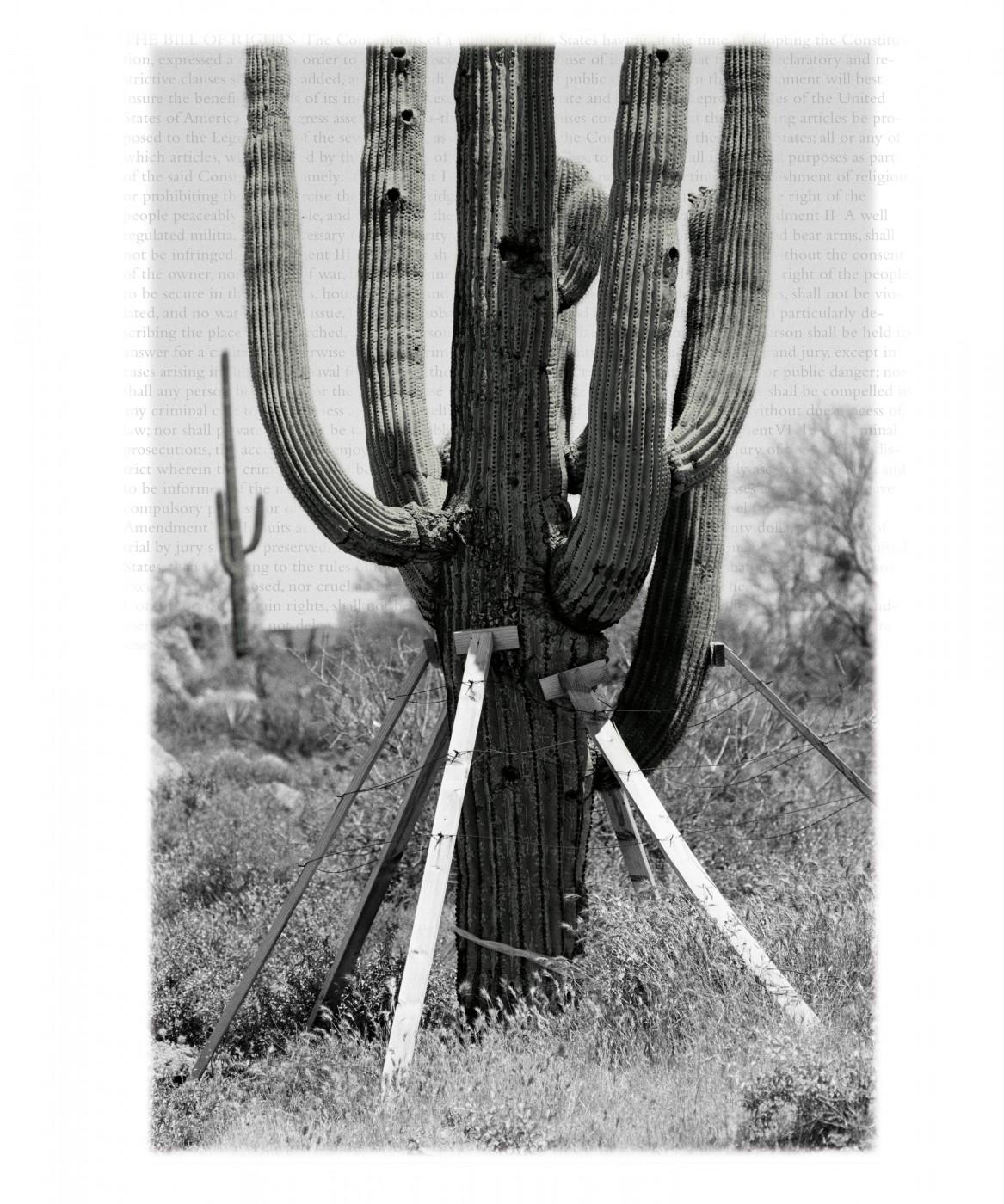 Stan Denniston, </span><span><em>Untitled, 2005-2007</em>, </span><span>6' x 4'