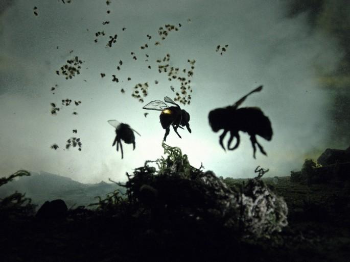 Adam Makarenko, </span><span><em>3 bee prototypes</em>, </span><span>8 x 10