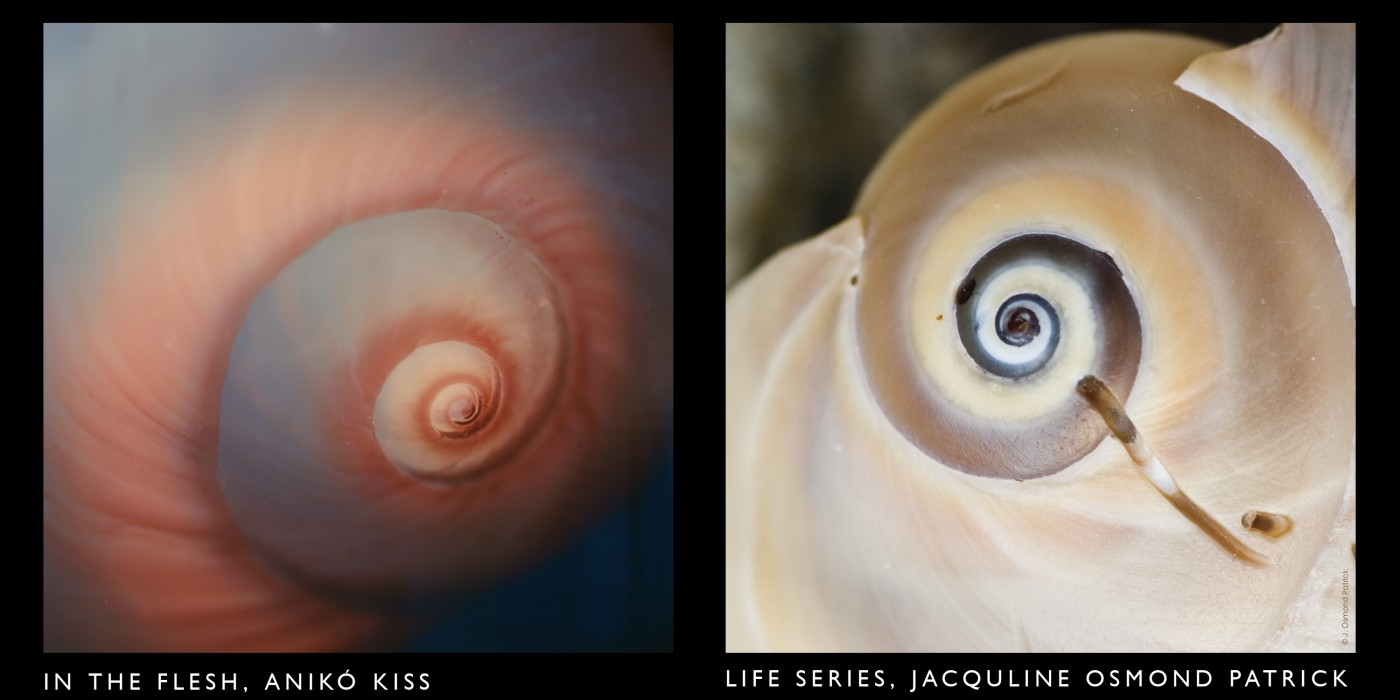Anikó Kiss, Jacqueline Osmond Patrick, </span><span><em>In the Flesh 2007: Life Series, 2006</em>, </span><span>Digital print