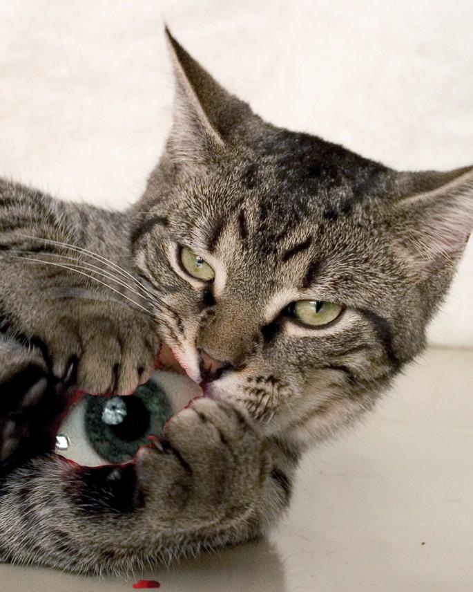 Janis Rees, </span><span><em>Bad Cat #3, 2007</em>