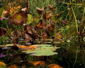 Christine Montague, </span><span><em>The Hidden Garden  2007</em>, </span><span> Digital  10 x 15