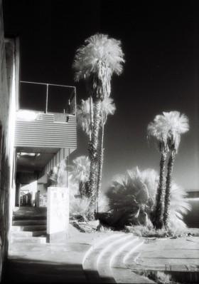 Sandi Wheaton, </span><span><em>North Shore Palms, 2006</em>, </span><span>11 x 14