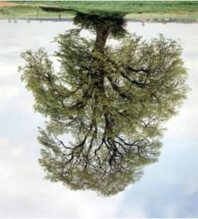 Rodney Graham, </span><span><em>Tree Portriats, 1980 - Present (detail)</em>