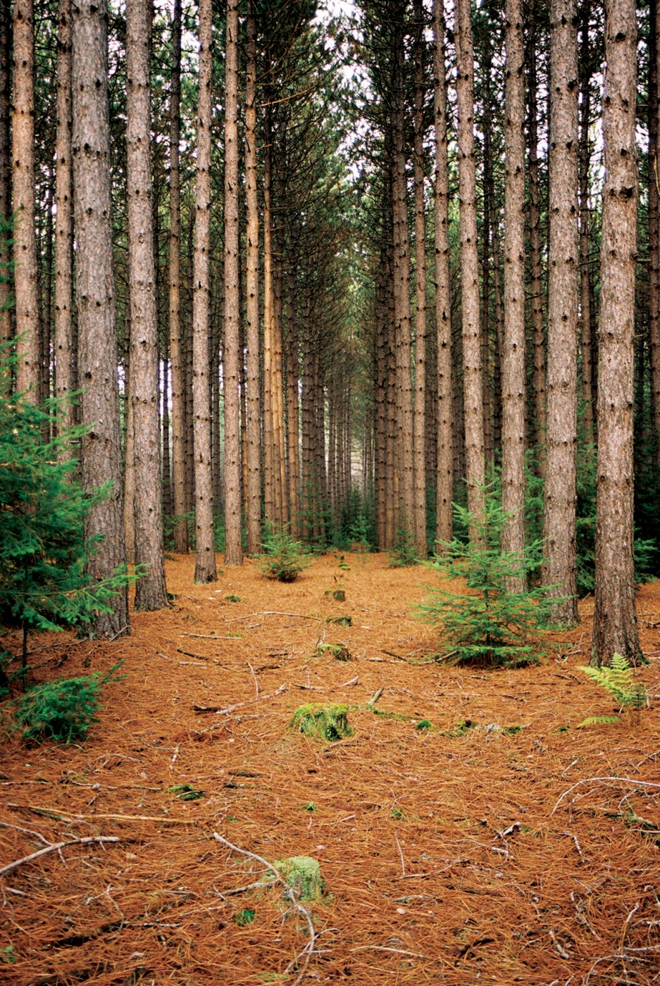 Laura Richardson, </span><span><em>Deep Forest, 2004</em>
