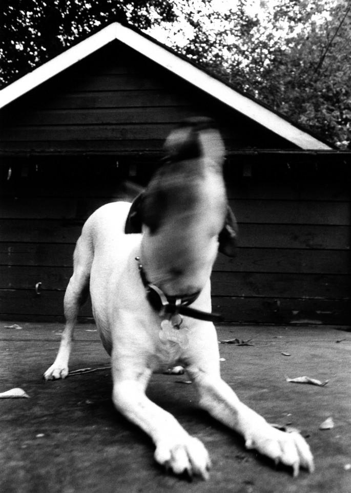 Zoe Mpeletzikas, </span><span><em>Blurry Dog, 2008</em>, </span><span>17 x 24 cm