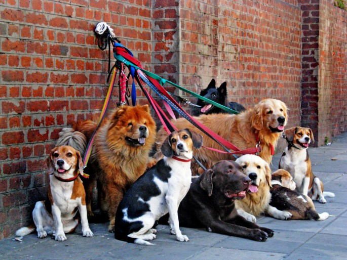 Christina Chan, </span><span><em>Dogs</em>, </span><span>2008