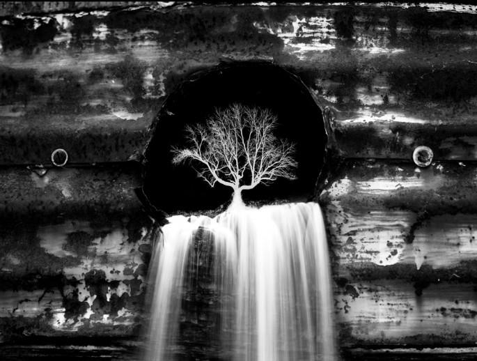 James Toth, </span><span><em>The Seed</em>, </span><span>2010