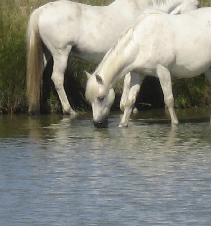 Joanne Malvern, </span><span><em>Wild Horses</em>, </span><span>2010