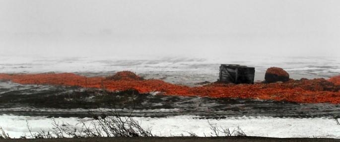 Carl Snyder, </span><span><em>Winter Carrots</em>, </span><span>2008
