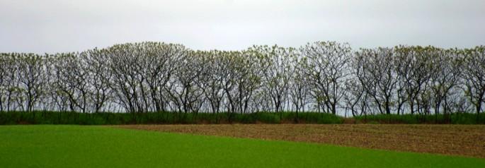 Carl Snyder, </span><span><em>Sumac treeline</em>, </span><span>2005