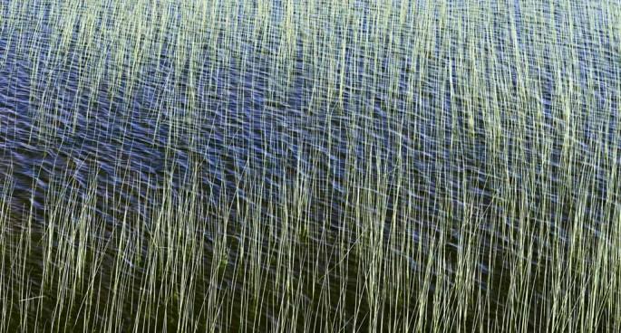 Janusz Wrobel, </span><span><em>Grassy Reef</em>, </span><span>2009