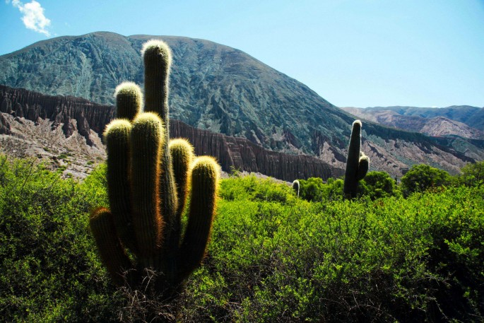 Dan Abramovici, </span><span><em>Cactus Party</em>, </span><span>2010