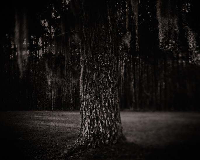 Ryan Szulc, </span><span><em>Southern Tree</em>, </span><span>2007