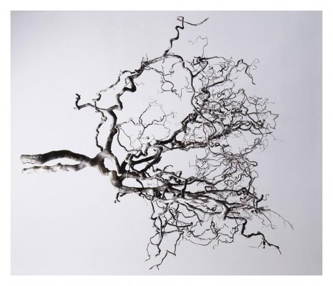 Kathleen Finlay, </span><span><em>Corkscrew Hazel</em>, </span><span>2011