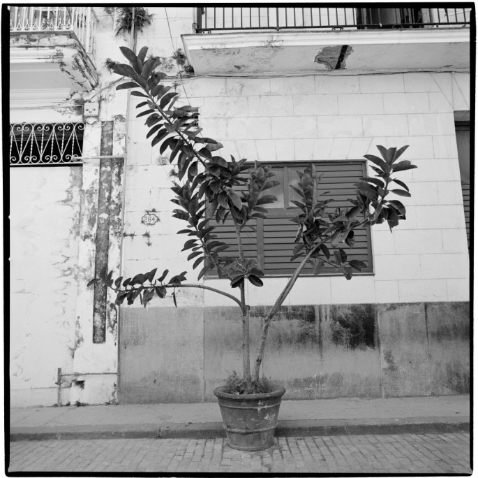 Phillipa C., </span><span><em>Cuban Potplant</em>, </span><span>2011