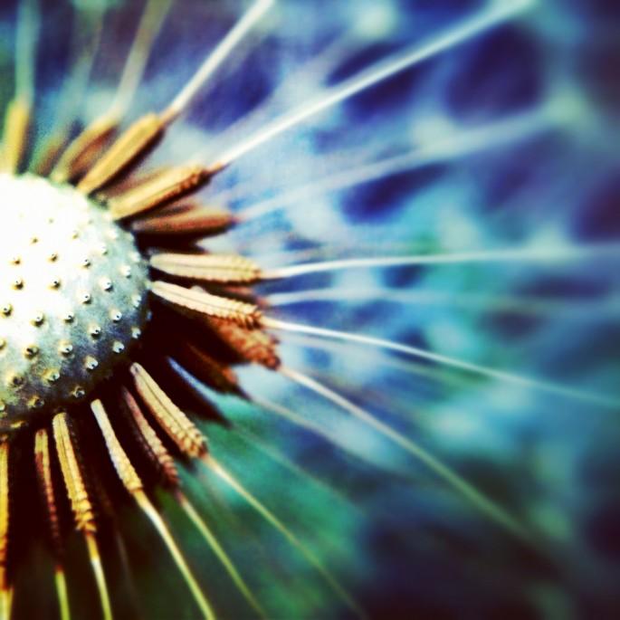 Sue Holland, </span><span><em>Make a Wish</em>, </span><span>May 2012
