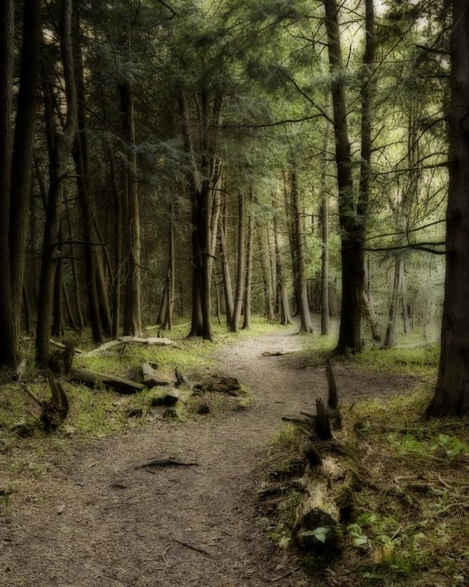 Andrew N. Kulin, </span><span><em>Seaton Trail</em>, </span><span>2010