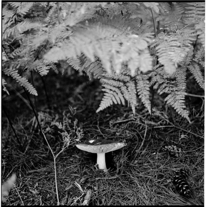 Phillipa C., </span><span><em>Mushroom</em>, </span><span>2011