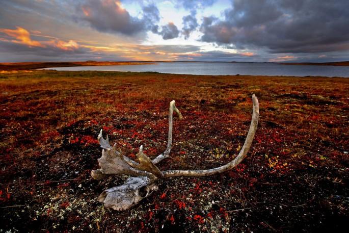 Chris Monette, </span><span><em>Lake Meliadine, Nunavut</em>, </span><span>2011