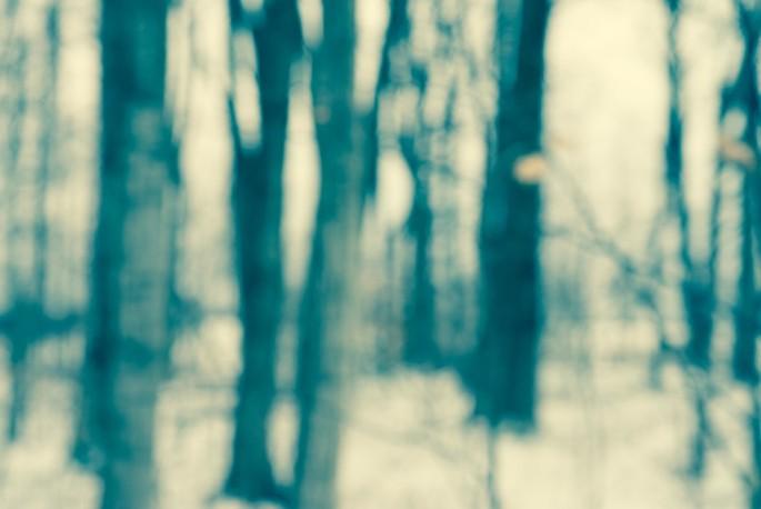 Sandy Middleton, </span><span><em>Can't see the forest</em>, </span><span>2013