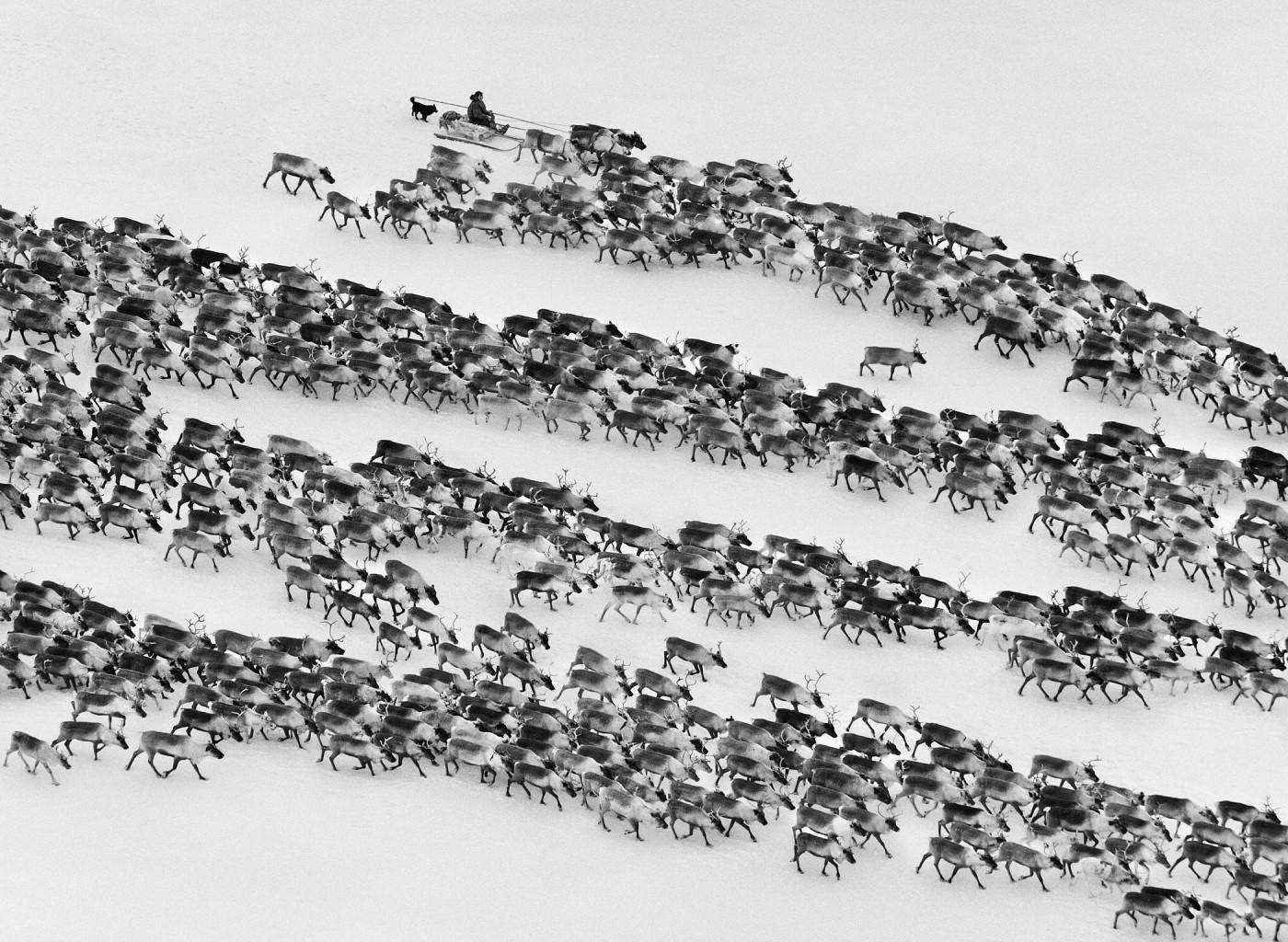 Sebastião Salgado, </span><span><em>Nenets of the Siberian Arctic, Russia</em>, </span><span>2011