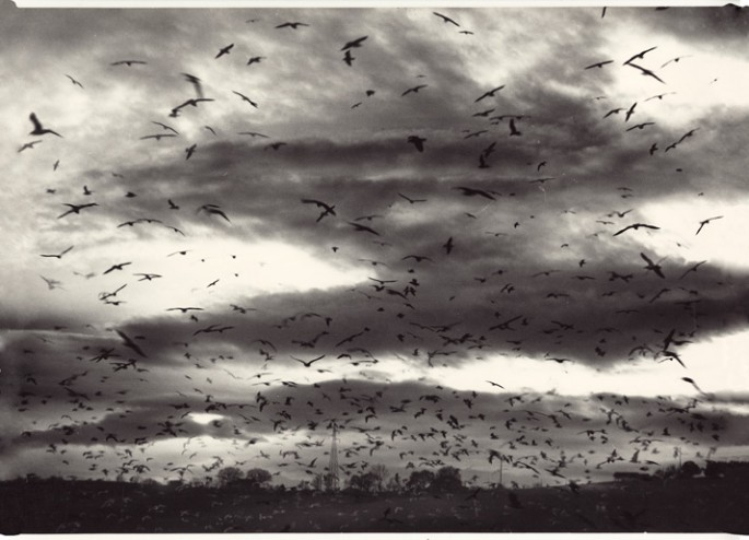 Mario Giacomelli (Italian), </span><span><em>Migrating birds in flight</em>, </span><span>c1980 Courtesy of Archive of Modern Conflict, London