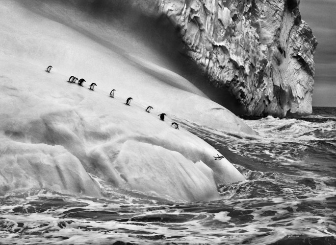 Sebasti&amp;#227;o Salgado, </span><span><em>Chinstrap penguins (Pygoscelis antarctica) on an iceberg located between Zavodovski and Visokoi islands</em>, </span><span>&lt;br /&gt; South Sandwich Islands, 2009 &amp;amp;#169 Sebasti&amp;#227;o Salgado / Amazonas images