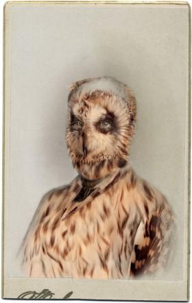 Sara Angelucci, </span><span><em>Aviary (Short Eared Owl/endangered)</em>, </span><span>2013