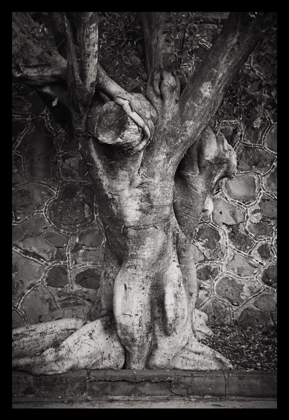 Rafael Goldchain , </span><span><em>Tree 1</em>, </span><span>2010