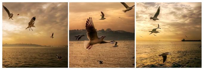 Ferit Onurlu, </span><span><em>Seagulls over Golden horn</em>, </span><span>2010