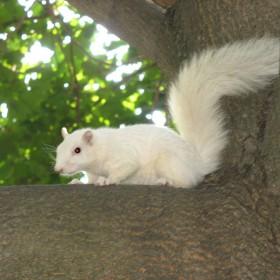 Shaun Moore, </span><span><em>Trinity Bellwoods Squirrel</em>, </span><span>2008