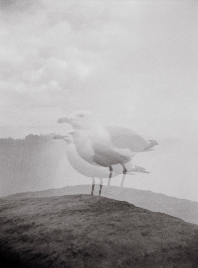 Phillipa C., </span><span><em>Seagull</em>, </span><span>2010