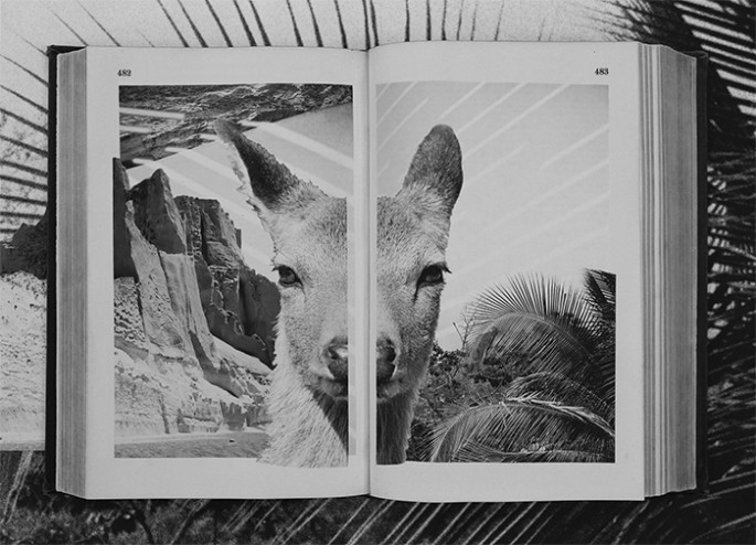 Tommy Matejka, </span><span><em>Miyajima Palm</em>, </span><span>2014