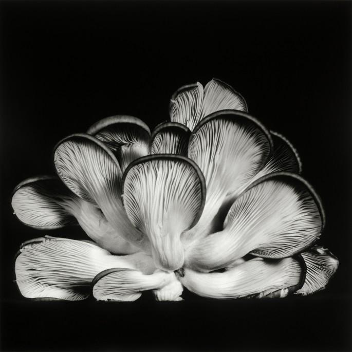 Dale M Reid, </span><span><em>Oyster Mushroom 15</em>, </span><span>2013