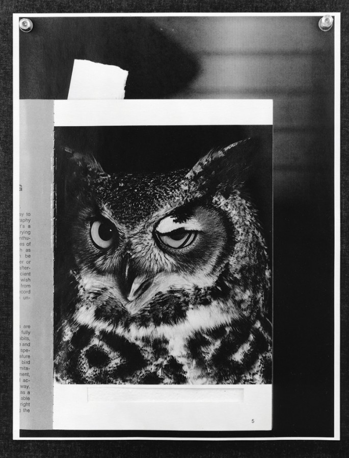 Colin Miner, </span><span><em>Using a lens from a nearby blind, it was possible to get a tightly cropped portrait of this great horned owl. Note that what appears to be a blinking eye is actually the nictitating membrane which gives protection to the eye. (available light #39)(Detail)</em>, </span><span>2013