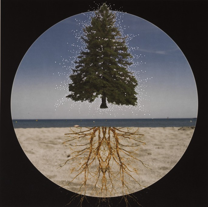 Nicola Woods (artwork photo by Brian Boyle), </span><span><em>Shedding Roots</em>, </span><span>2014