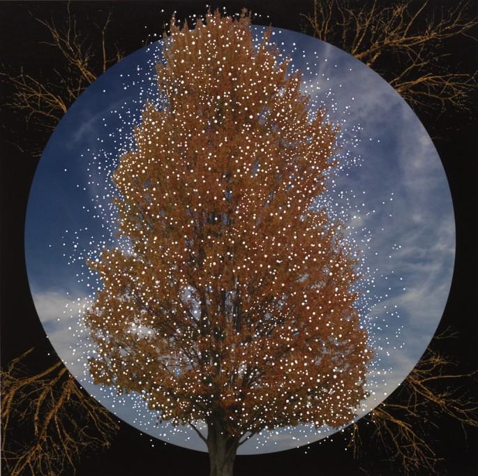 Nicola Woods (artwork photo by Brian Boyle), </span><span><em>Hidden Roots</em>, </span><span>2014