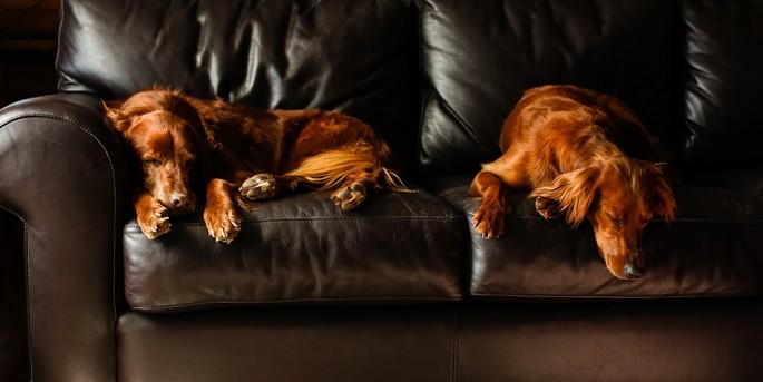 Marcia Leeder, </span><span><em>Let Sleeping Dogs Lie</em>, </span><span>2012