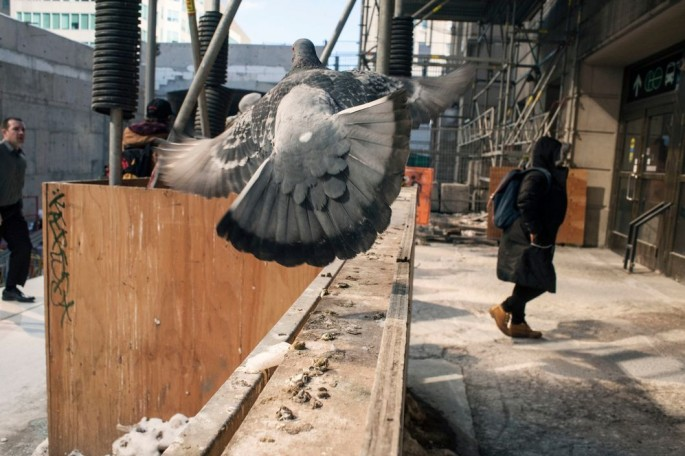 Larry Towell, </span><span><em>Construction, Union Station, Toronto</em>, </span><span>2014 Courtesy of the artist/Magnum Photos