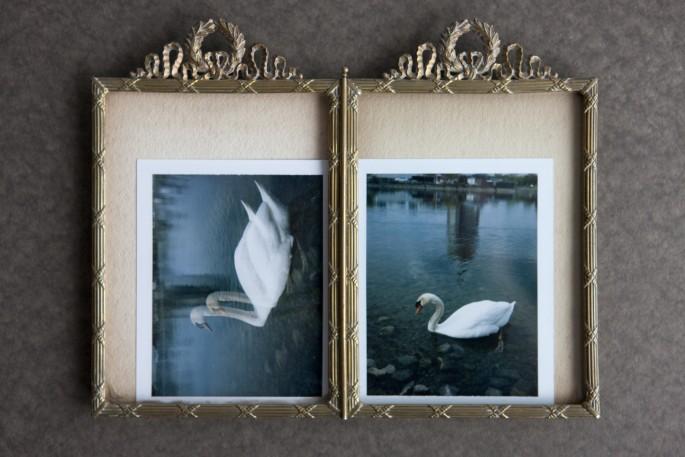 Phillipa C., </span><span><em>Swans</em>, </span><span>2015