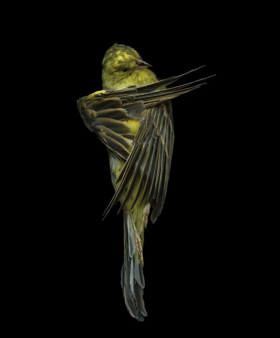 Edgar Leciejewski, </span><span><em>Yellowhammer #07</em>, </span><span>2009. From the series &quot;Aves,&quot; 2003-09